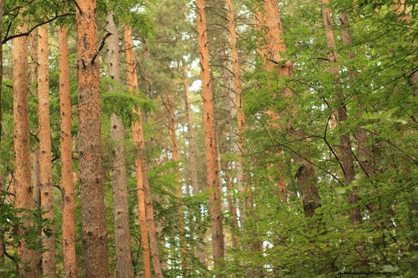 Лес в Болгарии | Фото: CC BY 2.0, User: d3l, flickr.com